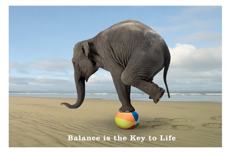 elephant on a ball